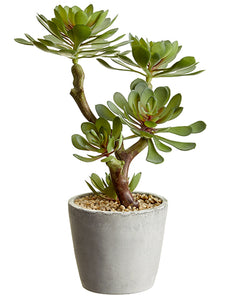 "12"" Soft Echeveria in Cement Pot Green Gray (pack of 4)"