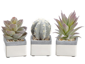 "5""-6"" Cactus/Echeveria/Aloe in Plastic Pot (3 ea/set) Green Burgundy (pack of 6)"