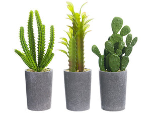 "7"" - 8"" Cactus in Paper Mache Pot Assortment (3 ea/set) Green (pack of 4)"