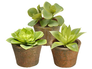 "4-5"" Soft PVC Kalanchoe/echeve Echeveria in Terra Cotta Pot Assortment (3 ea/set) Two Tone (pack of 5)"