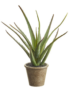 "11"" Soft Agave in Paper Mache Pot Green (pack of 12)"