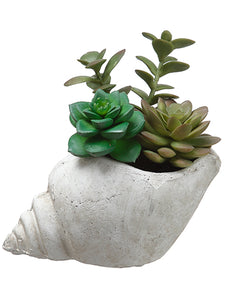 "6"" Succulent Garden in Shell  Grren (pack of 6)"