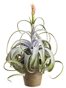"23"" Blooming Tillandsia in Paper Mache Pot Green Gray (pack of 2)"
