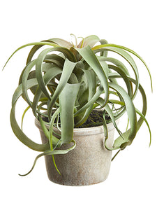 "10.5"" Tillandsia in Paper Mache Pot Green (pack of 4)"