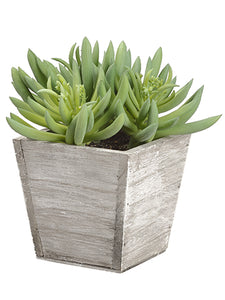 "7"" Soft PVC Spike Aeonium in Wood Planter Green (pack of 6)"