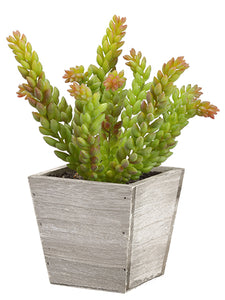 "9.5"" Soft PVC Sedum in Wood Planter Green (pack of 6)"