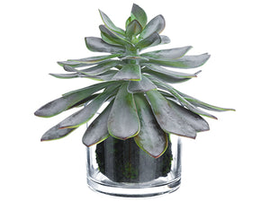 "10"" Echeveria in Glass Vase  Gray Burgundy (pack of 2)"