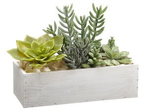 "10"" Succulent Garden in Wood Container Green (pack of 1)"
