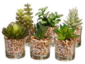 "3-4"" Succulent in Glass Vase Assortment (6 ea/set) Two Tone Green (pack of 4)"