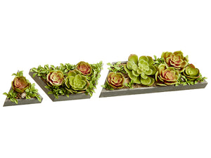"4""-11.5"" Succulent Garden in Cement Pot (3 Assortments/set) Green Burgund (pack of 3)"