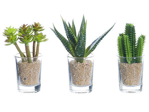 "3.5""-4"" Cactus in Glass Vase Assortment (3 ea/set) Green (pack of 12)"