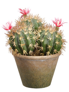 "11.25"" Flowering Barrel Cactus in Paper Mache Pot Green Pink (pack of 6)"