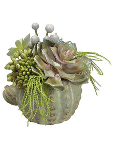 "7"" Echeveria/Sedum/Brunia in Cement Cactus Planter Green Gray (pack of 2)"