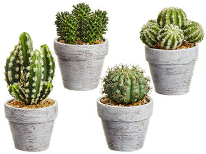 "5-7.25"" Cactus in Ceramic Pot (4 Styles/set) Two Tone Green (pack of 2)"
