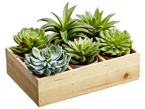 "4.5""-6.5""H Potted Succulent (6 Styles/Wood box) Two Tone Green (pack of 2)"