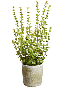 "24"" Soft Plastic Jade Plant in Mgo Pot Green (pack of 1)"