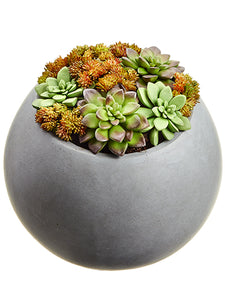 "9.06"" Echeveria/Sedum Arrangement in Mgo Pot Green Burgundy (pack of 1)"