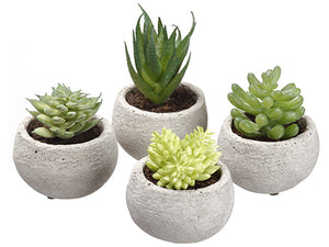 "3.5""H Assorted Succulent in Cement Pot (4 ea/set) Two Tone Green (pack of 3)"