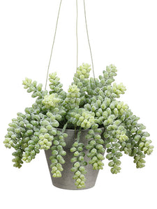 "7"" Sedum Bush in Pot with Hanger Frosted Green (pack of 6)"