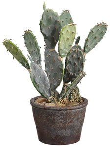 "12.5"" Bunny Ear Cactus in Paper Mache Pot Green (pack of 6)"