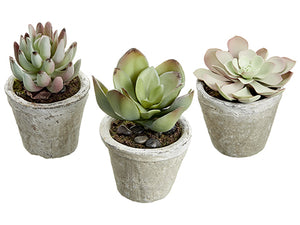 "4.2"" - 5.5"" Succulent in Cement Pot (3 Assortments/set) Green Pink (pack of 2)"