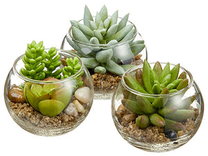"3"" Mini Succulent in Glass Vase (3 ea/set) Two Tone Green (pack of 2)"