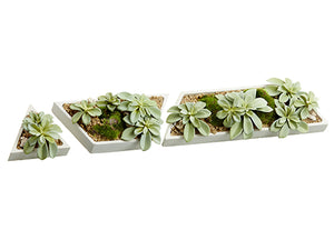 "4""-11.5"" Succulent Garden in Cement Pot (3 Assortment/set) Green Gray (pack of 3)"