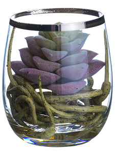 "3.75"" Sedum/Roots in Glass Vase Green Burgundy (pack of 6)"