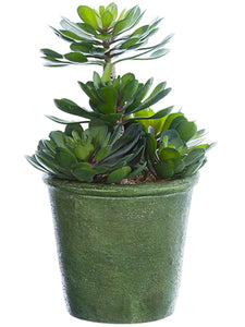 "11.5"" Echeveria Plant in Paper Mache Pot Green (pack of 2)"