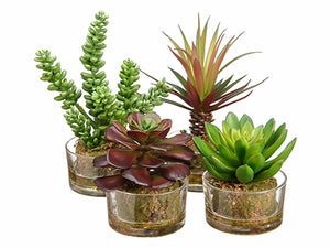 "4.5""-8"" Succulent Garden in Glass Vase (4 Styles/Assorted) Assortment (pack of 4)"