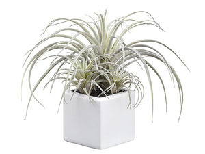 "9"" Tillandsia x3 in White Ceramic Pot Green Frosted (pack of 6)"