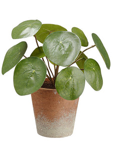 "9.5"" Watercress Plant in Paper Mache Pot Green (pack of 12)"