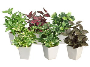 "7.5"" Assorted Greenery Arrangement in Ceramic Pot 6 Styles Green Burgundy (pack of 12)"