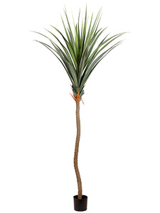 "117"" Agave Tree in Plastic Nursery Pot Green (pack of 2)"