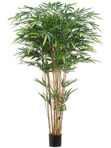 6' Tropical Bamboo Tree x12 w/1664 Leaves in Pot Green (pack of 2)
