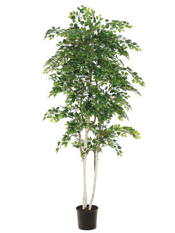 7' Sherman Birch Tree with 2748 Leaves in Pot Green (pack of 2)