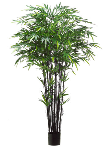 7' Tropical Black Bamboo Tree with 1984 Leaves in Pot Green (pack of 2)