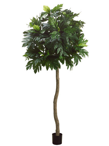 8' Breadfruit Tree w/135 Leaves in Pot Green (pack of 2)