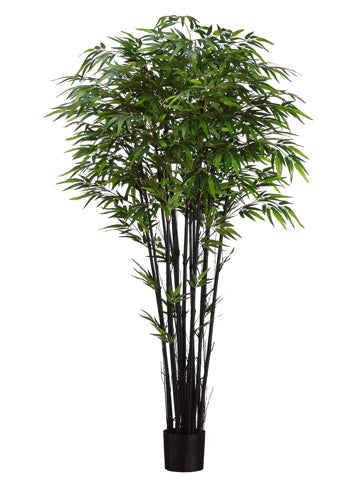 6' Natural Black Bamboo Tree x15 w/2240 Leaves in Pot Two Tone Green (pack of 2)