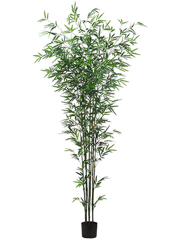 7' Bamboo Tree x7 in Pot  Green (pack of 2)