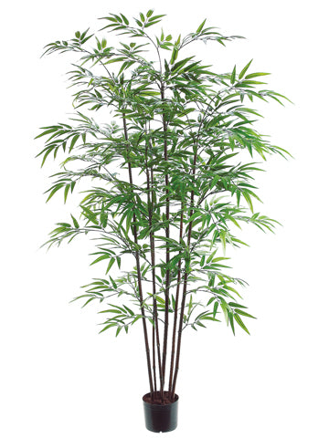 5' Black Bamboo Tree x7 with 1200 Leaves in Pot Green (pack of 2)