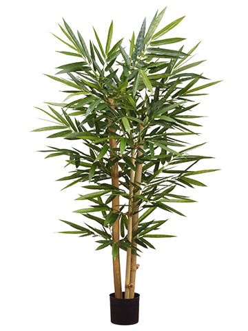 4' Bamboo Tree With 494 Leaves in Plastic Nursery Pot Green (pack of 2)