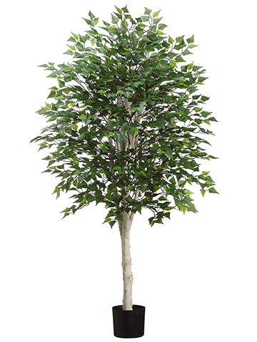 5' Birch Tree with 1638 Leaves in Pot Green (pack of 2)