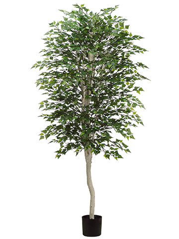 7' Birch Tree w/2394 Leaves in Pot Green (pack of 2)