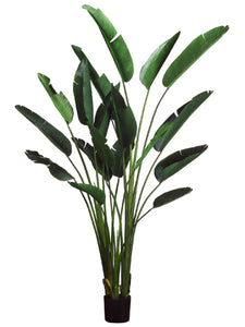 "93"" Bird of Paradise Plant with 18 Leaves in Plastic Pot Green (pack of 2)"