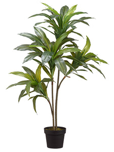 "39"" Exotic Dracaena Tree x2 in Pot Green (pack of 4)"