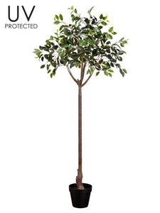 "65"" UV Protected Ficus Topiary in Plastic Pot Green (pack of 2)"