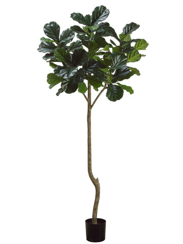 7' Fiddle Leaf Plant with 96 Leaves Green (pack of 2)