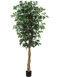 5' Ficus Tree in Pot  Green (pack of 2)