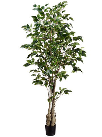 5' Ficus Tree w/859 Lvs. in Plastic Pot Green (pack of 4)